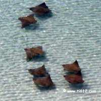 Click here to see video from our balcony of a school of stingrays swimming by